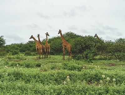 Chyullu Hills National Park