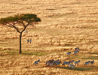 Endless Plains Serengeti