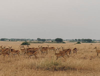 Exciting Uganda Safari