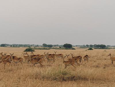 Exciting Uganda Safari