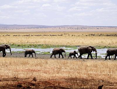 Tanzania Northern Safari
