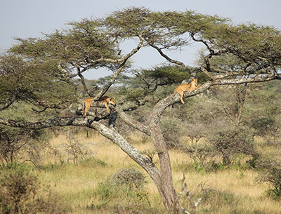 Tanzania Unexploited Safari