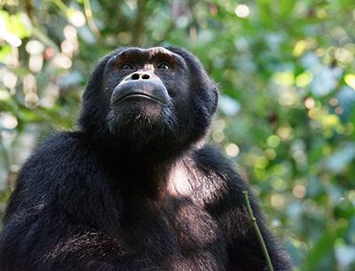 Uganda Dream Safari