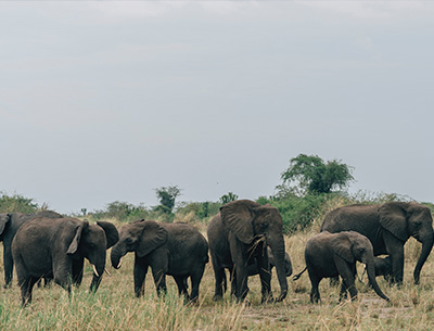 Uganda's Big Five Safari