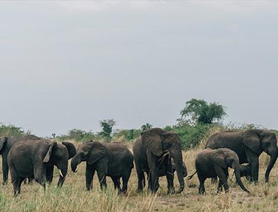 Uganda's Big Five Safari